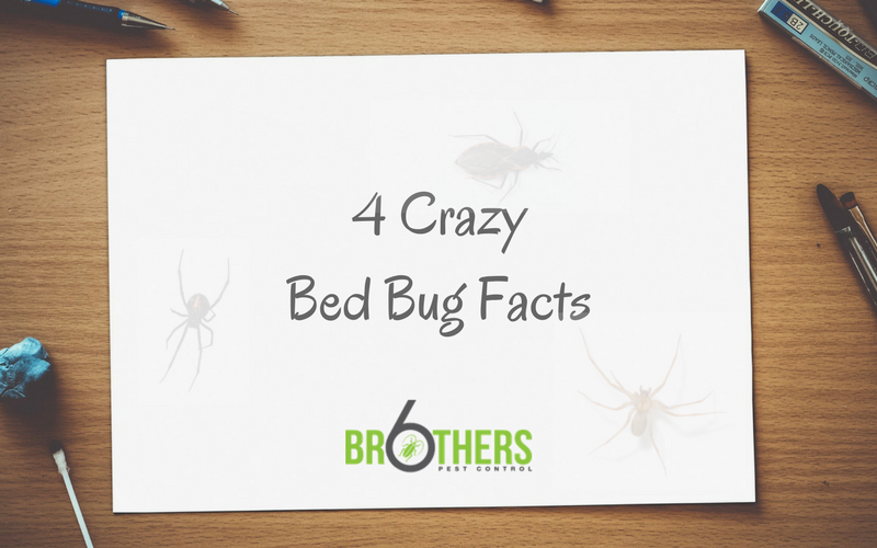 4 Crazy Bed Bug Facts