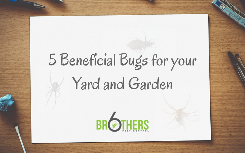 5 Beneficial Bugs for Your Yard and Garden