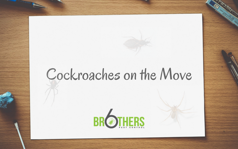 Cockroaches on the move