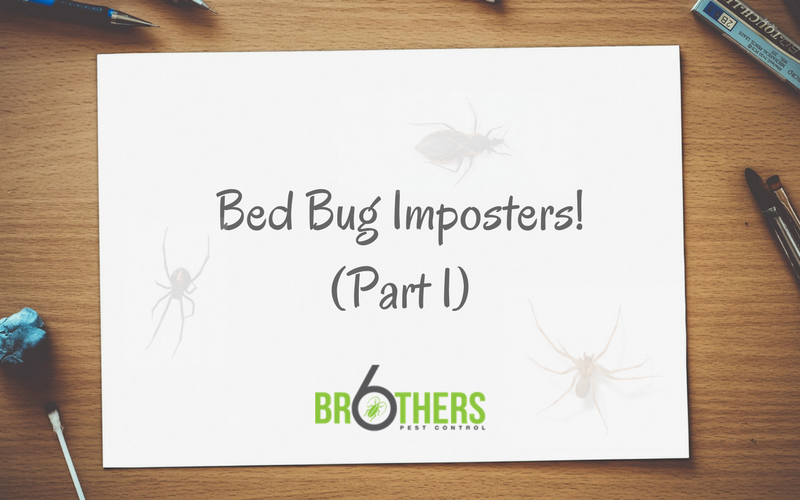 Bed Bug Imposters part 1