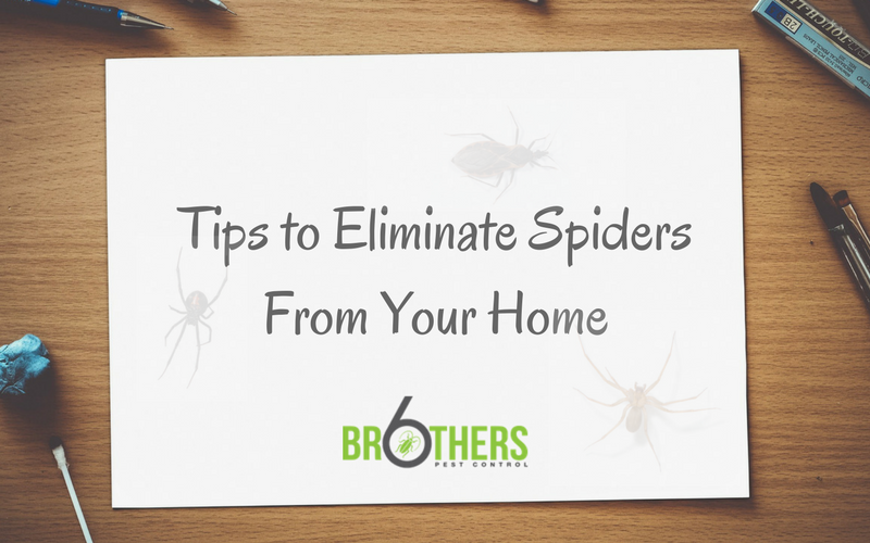 Tips and Tricks to Eliminate Spiders From Your Home