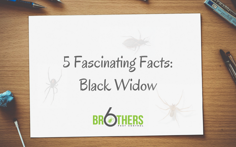 Five Fascinating Black Widow Facts