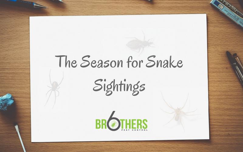 The Season for Snake Sightings