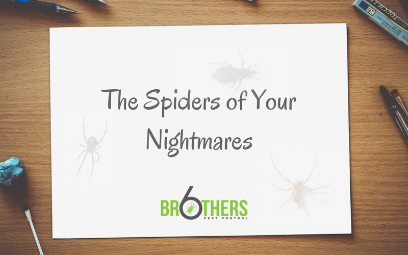 The Spiders of Your Nightmares