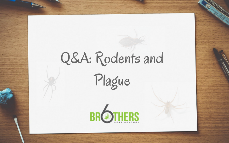 Q&A: Rodents and Plague