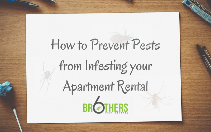 How to Prevent Pests from Infesting your Apartment Rental