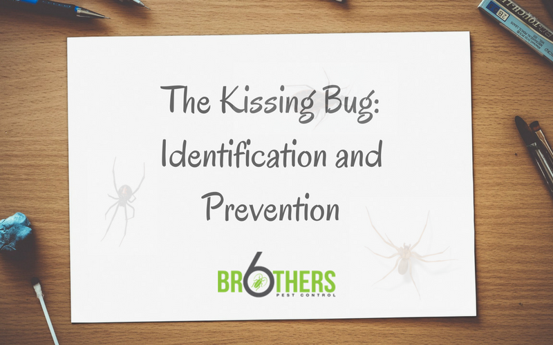 The Kissing Bug: Identification and Prevention