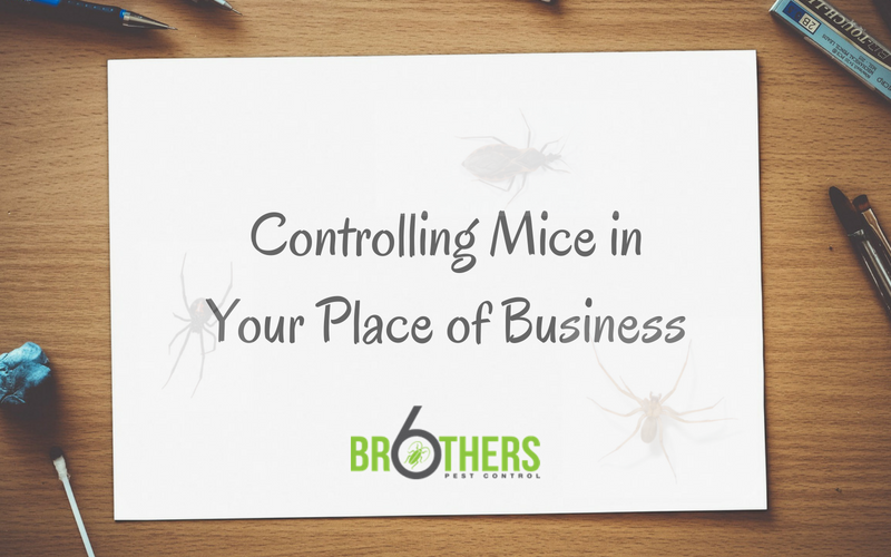 Mice Pose A Risk To Your Business – Protect Your Reputation With These Tips