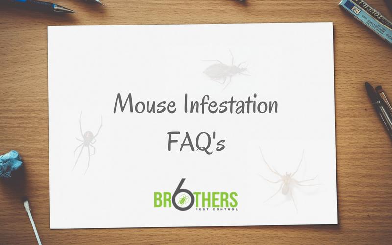 Mouse Infestation FAQ