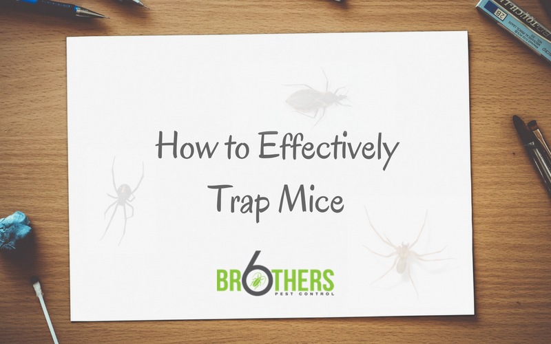 How to Effectively Trap Mice
