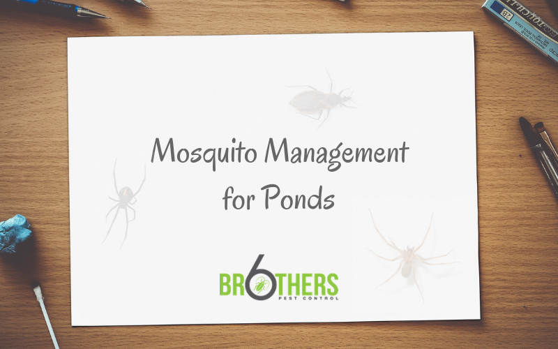 mosquito management for ponds