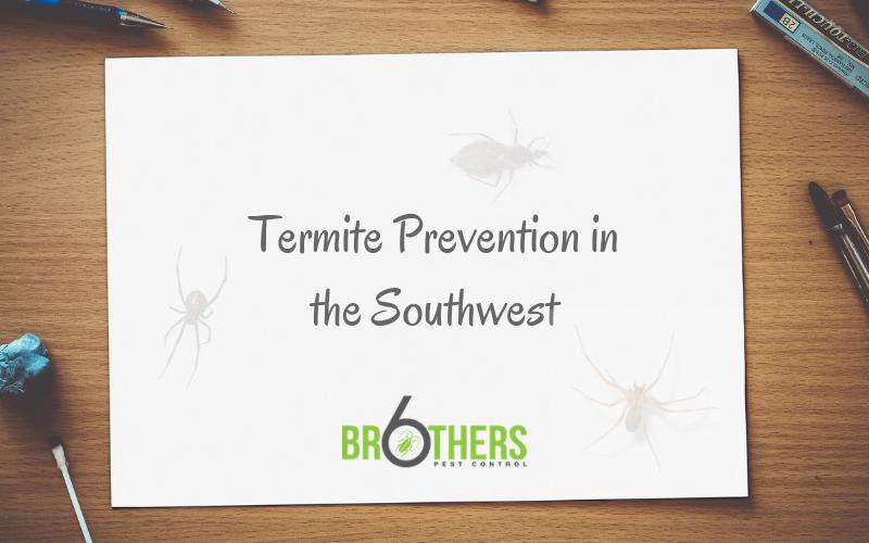 termite prevention in the Southwest