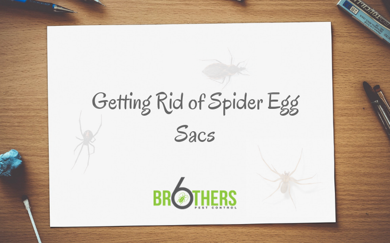 Getting Rid of Spider Egg Sacs