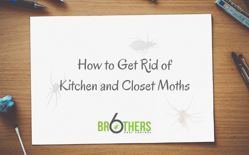 How to Get Rid of Kitchen and Closet Moths