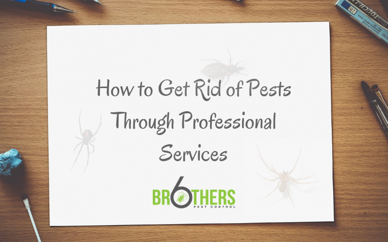 How to Get Rid Of Pests throughProfessional Services