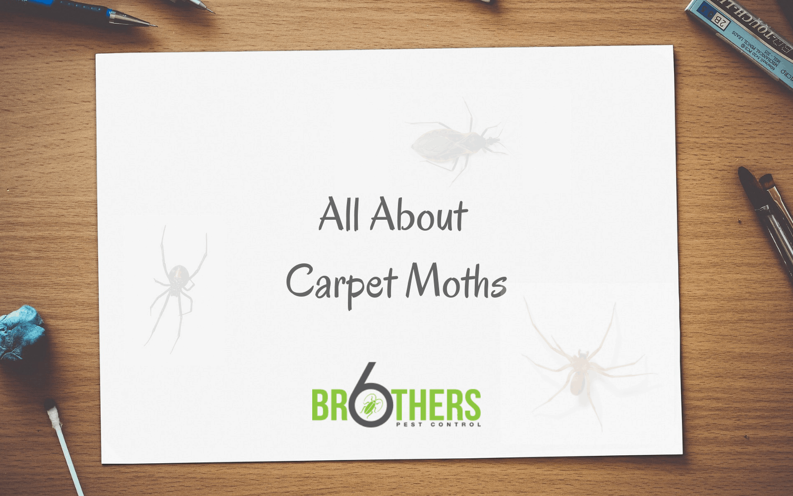 What Causes Carpet Moths & Where Do They Come From?