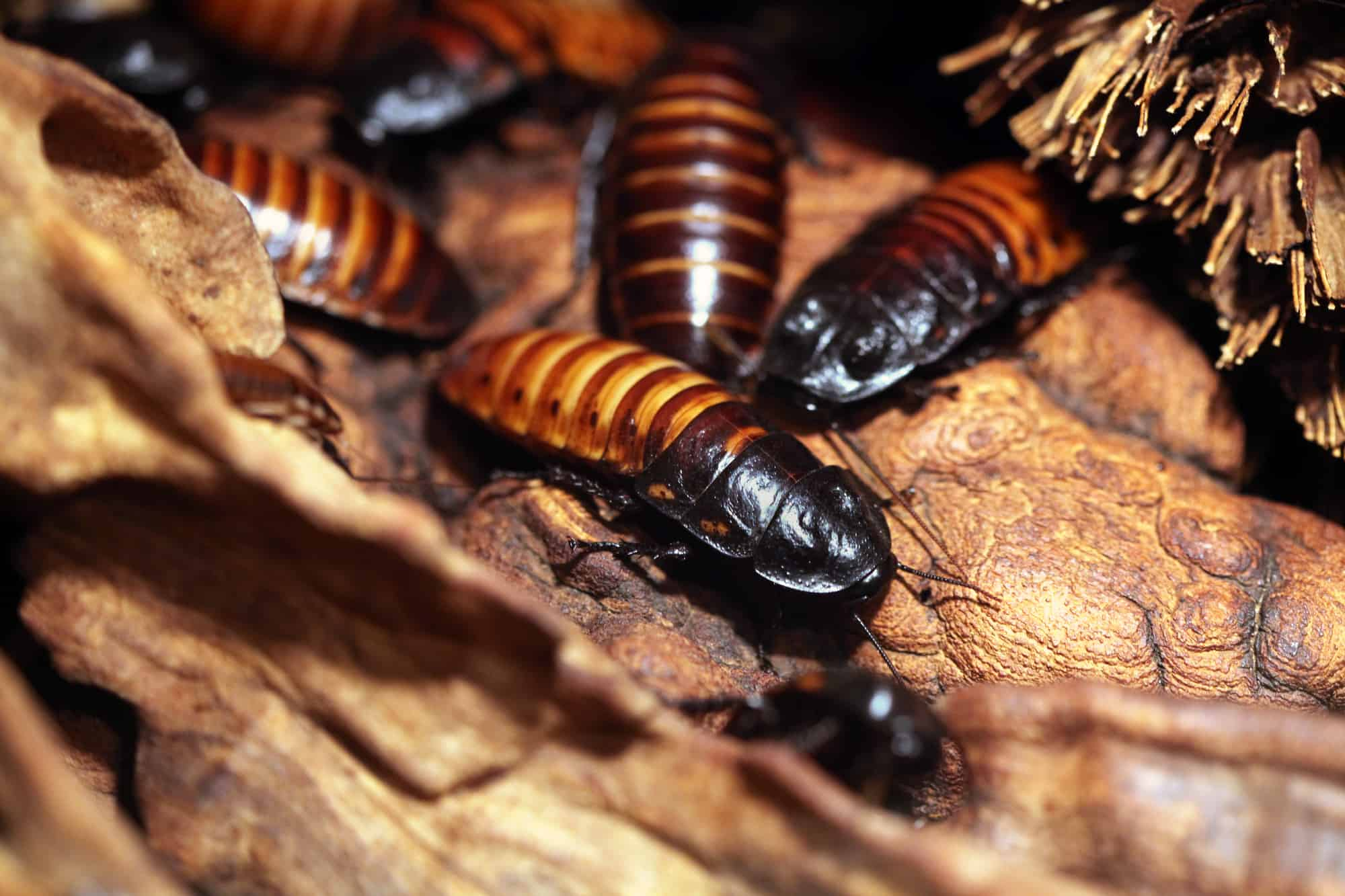 Cockroaches Found In the USA