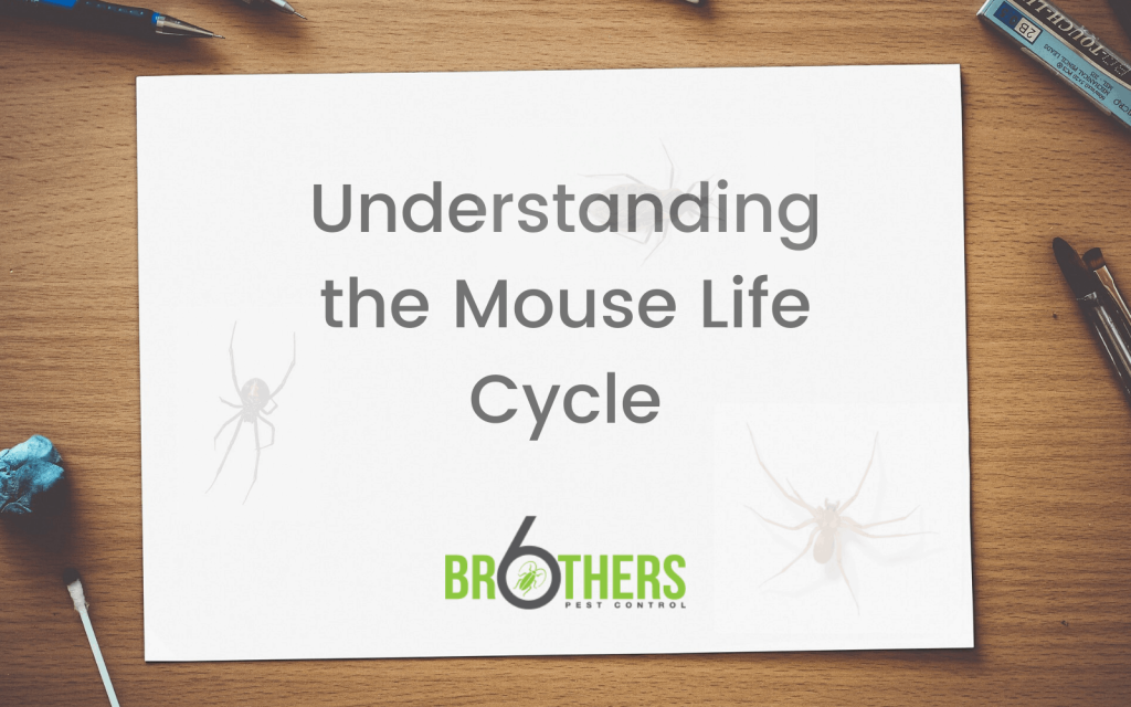 Understanding the Mouse Life Cycle