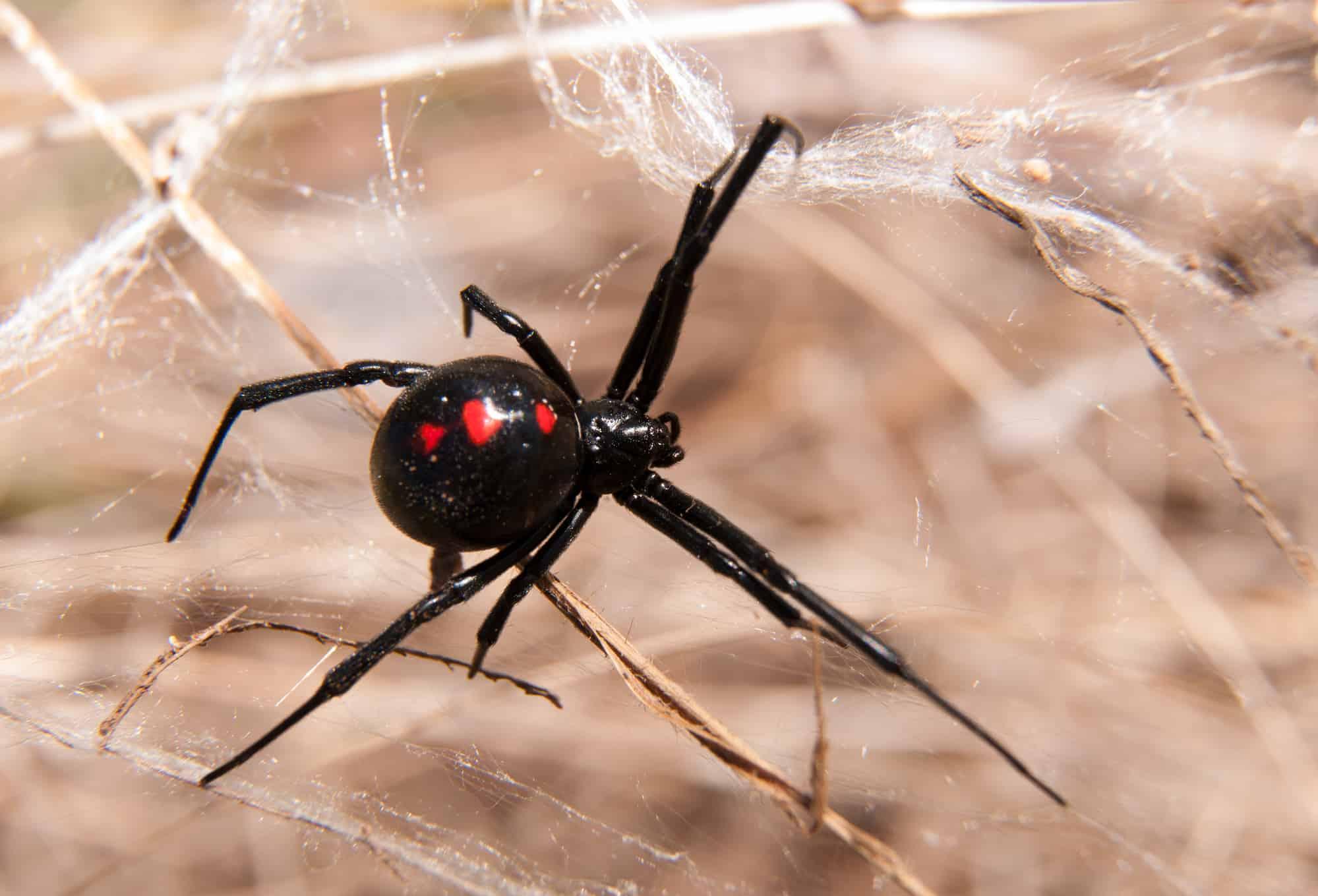 Dangerous Pests in St George, UT