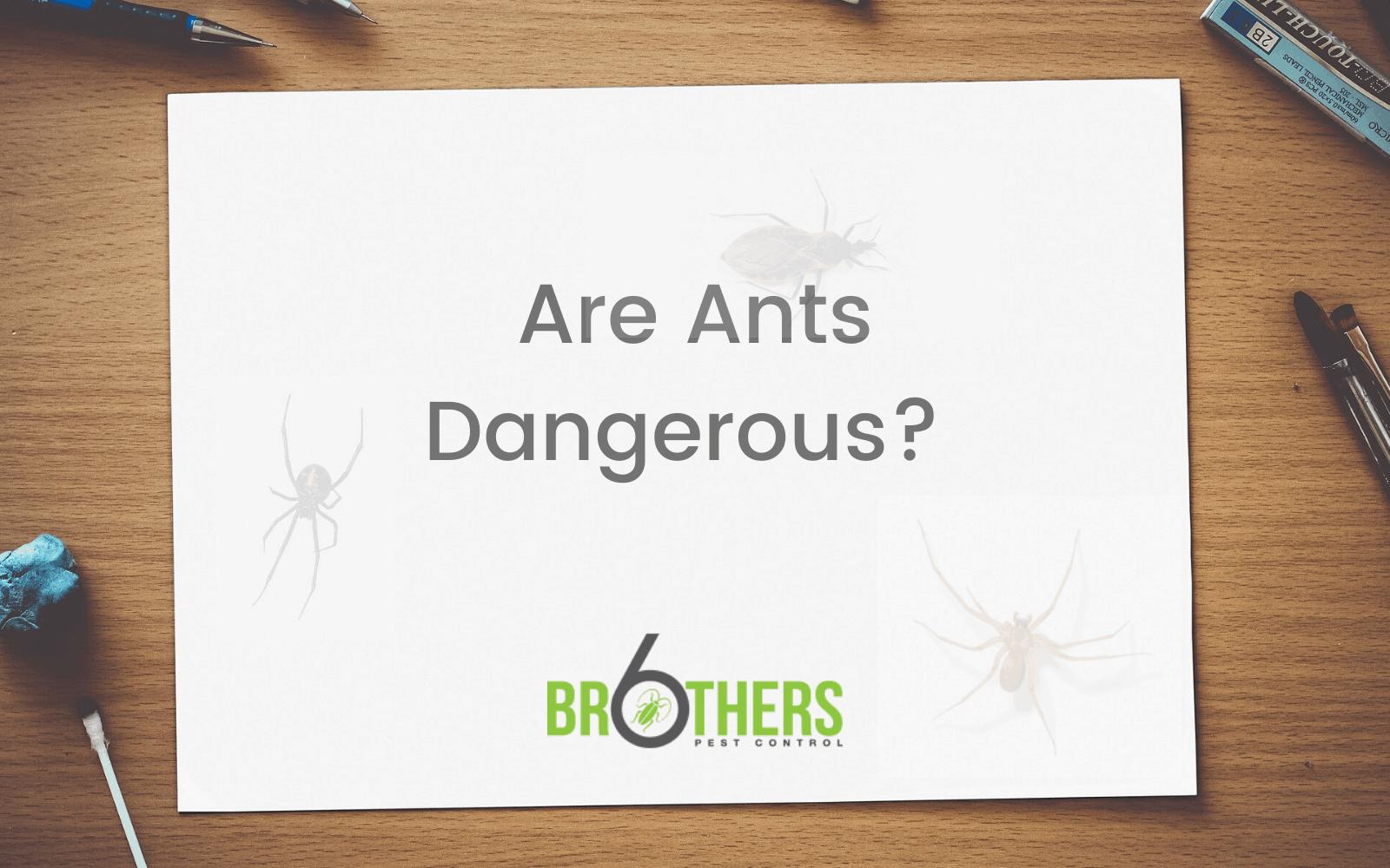 Are Ants Dangerous?