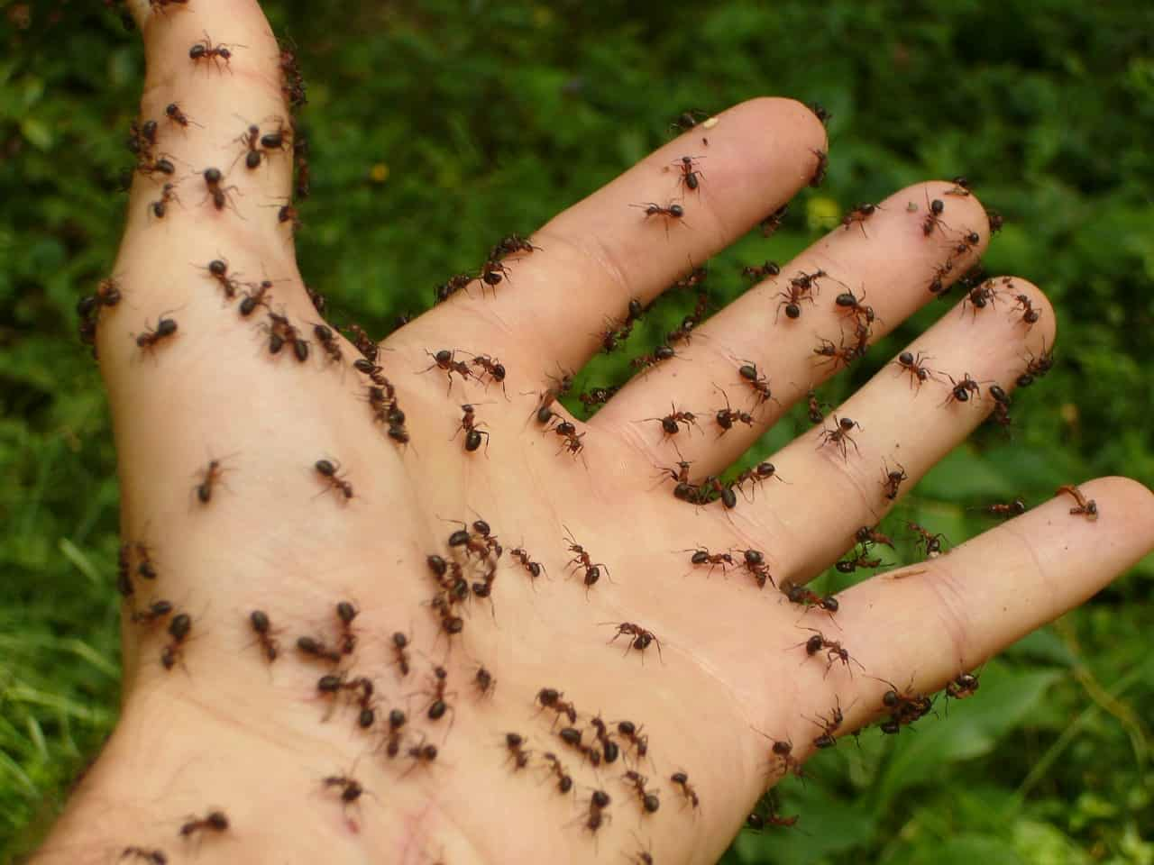 ants in hand