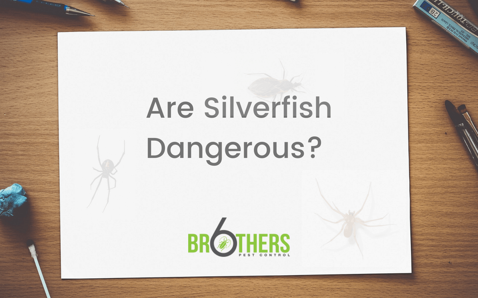 Are Silverfish Dangerous?