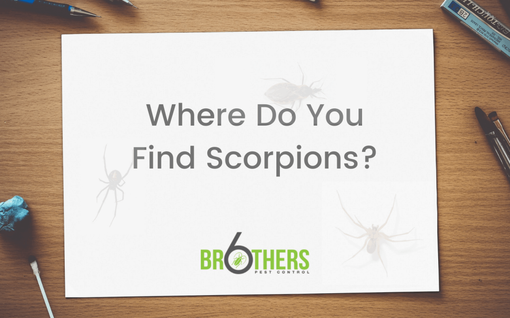 Where Do You Find Scorpions?