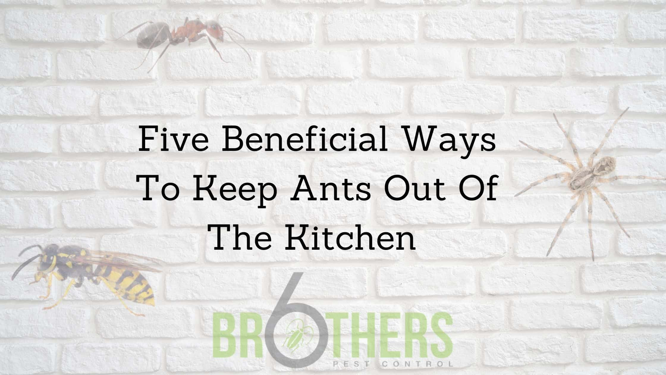 Five Beneficial Ways To Keep Ants Out Of The Kitchen