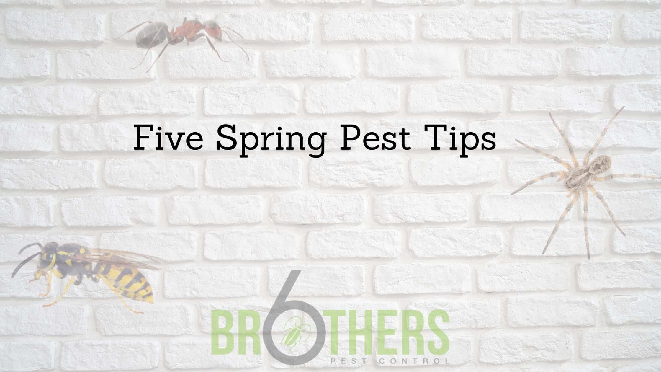 Five Spring Pest Tips