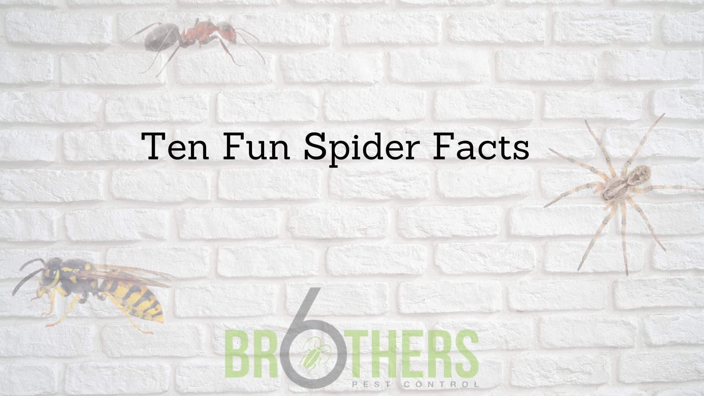 Ten Fun Spider Facts