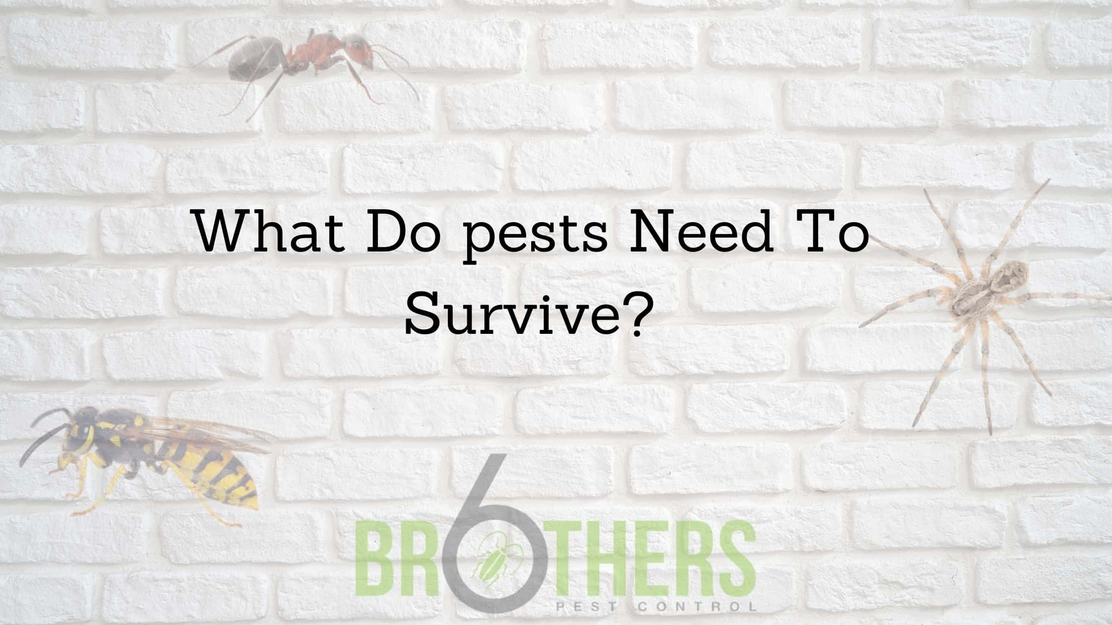 What Do pests Need To Survive?