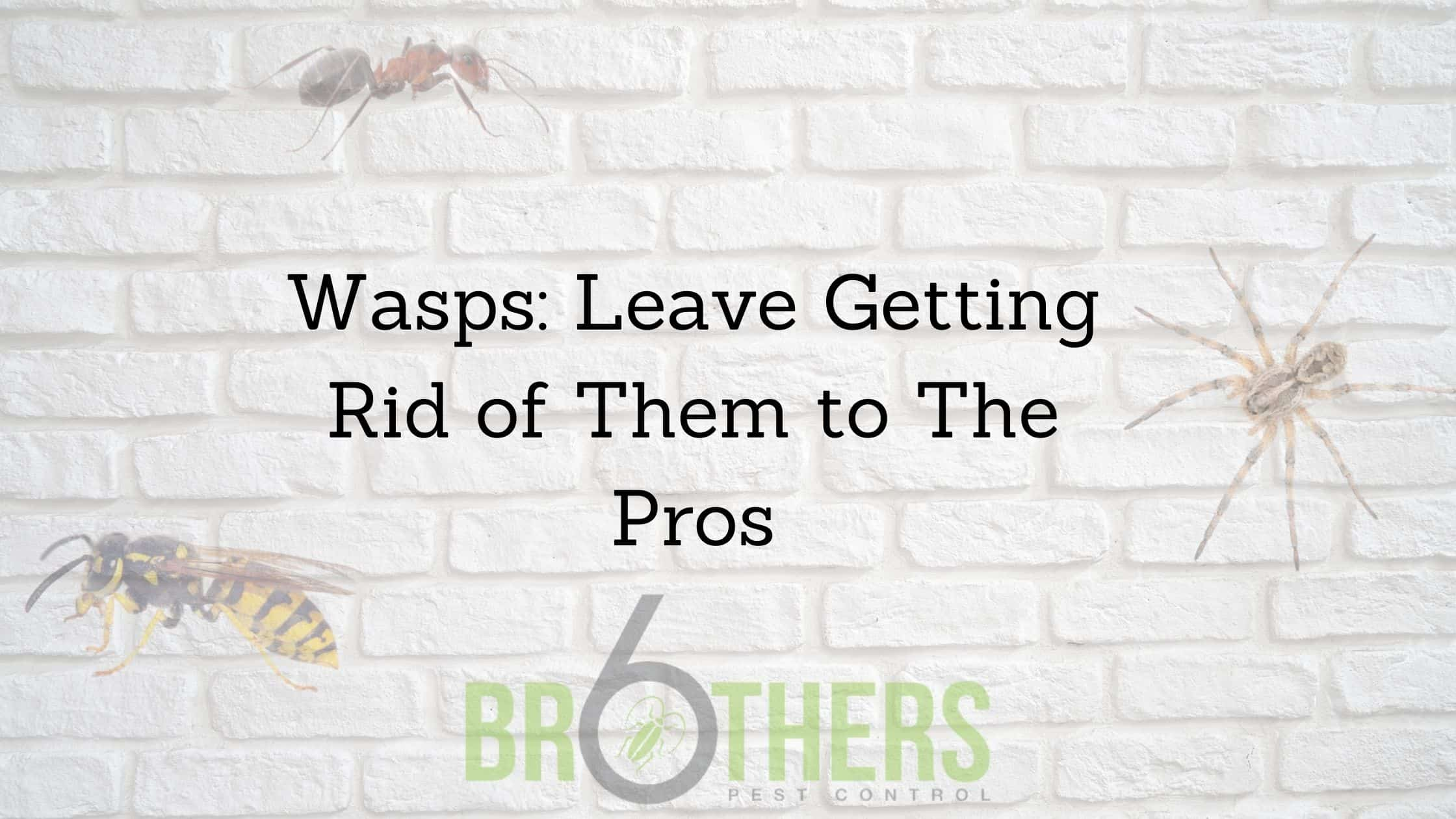 Wasps: Leave Getting Rid of Them to The Pros