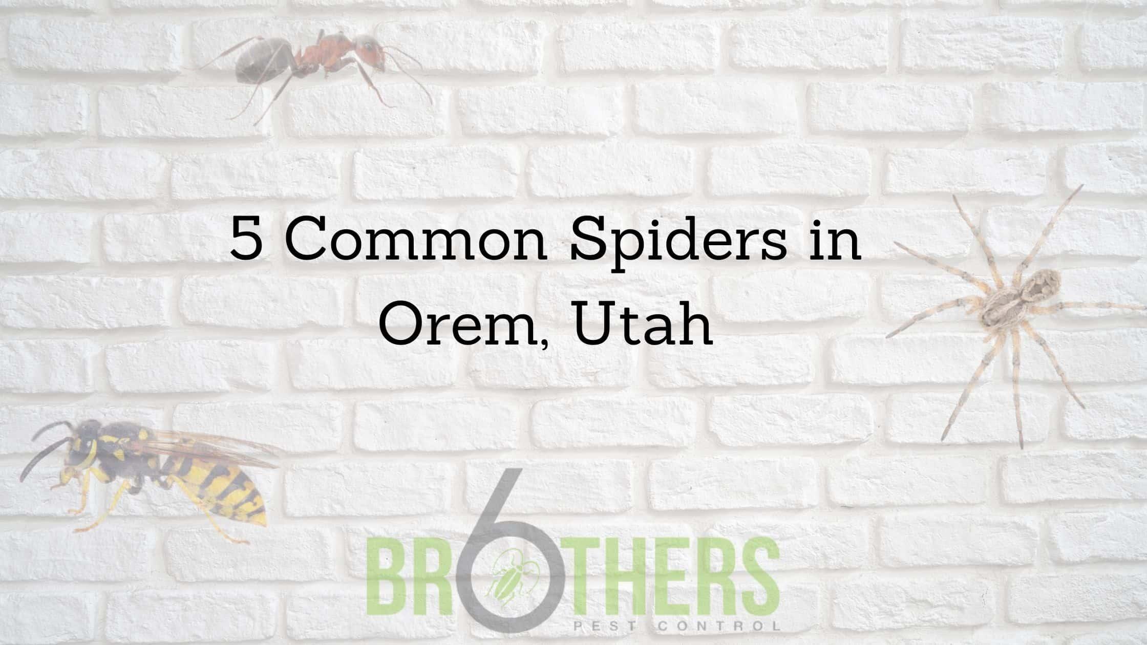 5 Common Spiders in Orem, Utah